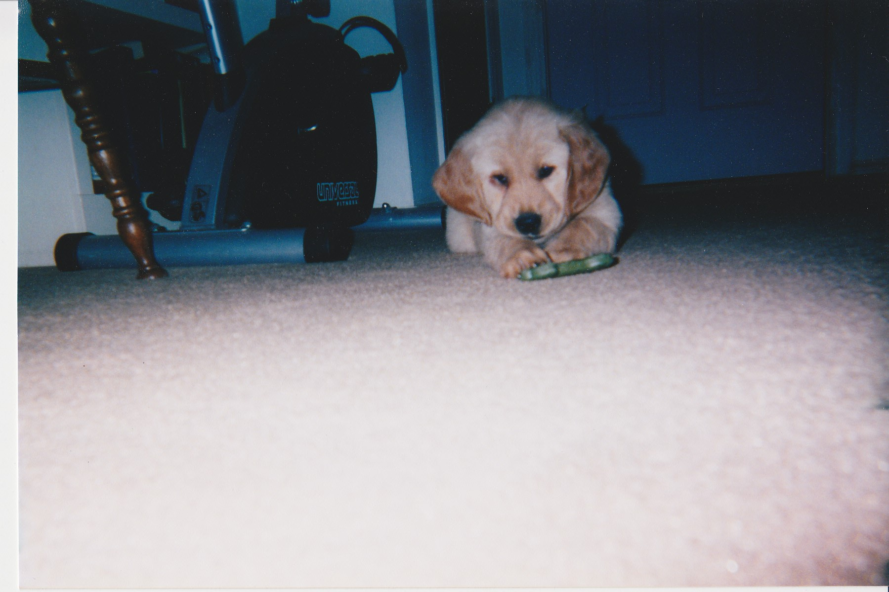 Callie's 1st Day Home - 3